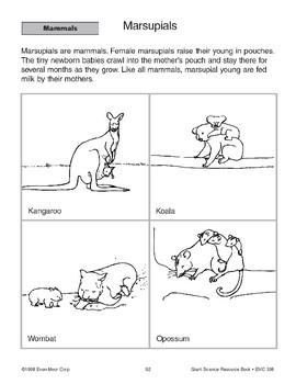 Mammals: Marsupials