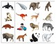 Mammals: Match-up and Vocabulary Enrichment Cards