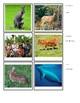 Mammals Matching Cards - Montessori
