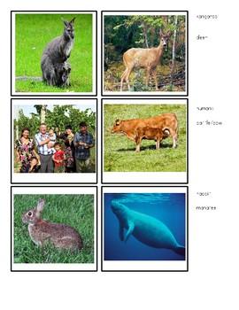 Mammals- Montessori Sensorial Matching Cards