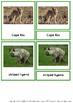 Mammals Of Africa – Montessori Nomenclature And Information Cards