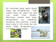 Mammals PowerPoint and Activity
