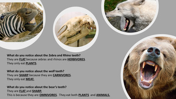 Mammals- PowerPoint and Handout