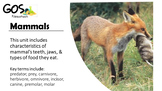 Mammals- PowerPoint and Handout #distancelearning