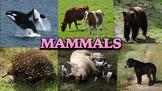 Mammals - Powerpoint