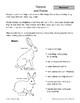 Mammals: Rabbits and Hares