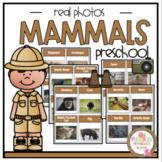 Mammals Real Photos Cards