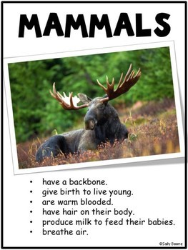 Mammals - Tab Book and Flip Cards Interactive Notebook