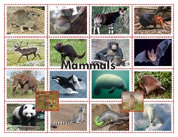 Mammals: Three Part Cards