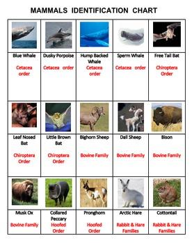 Mammals Tic Tac KNOW  Volume 2