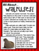 Mammals Unit {Anchor Charts, Graphic Organizers, Research & MORE!}