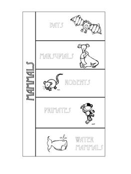 Mammals / Vertebrates