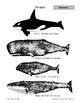 Mammals: Whales