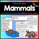 Mammals Worksheets and Activities