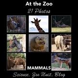 Mammals at the Zoo - Photos