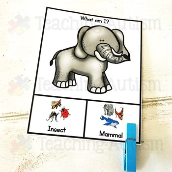 Mammals v Insects, Sorting Categories Task Cards