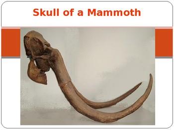 Mammoth vs Elephant