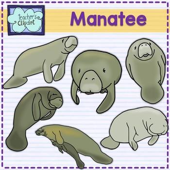 Manatee Clip art  Summer aquatic animals