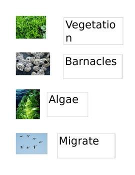 Manatee Vocabulary Cards