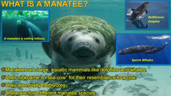 Manatees - PowerPoint & Activities