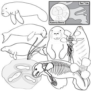 Manatees Clip Art Set - Sirenians