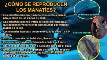 El Manatí - Presentación en PowerPoint y Actividades