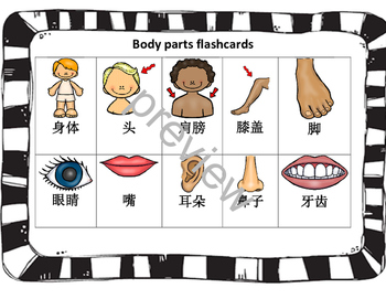 Mandarin Chinese Body Parts set I bundle package 身体部位I游戏集合