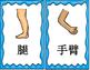 Mandarin Chinese body parts big flashcards set II 身体部位大词卡II