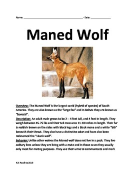 Maned Wolf - Informational Article Review Facts Questions Vocabulary
