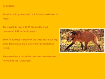 Maned Wolf - Power Point - Information Facts Pictures