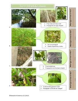Mangroves: Informational Text, Vocabulary Challenge, & Tree Identification