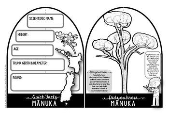 Manuka {New Zealand Trees Make & Do Activity Pack}
