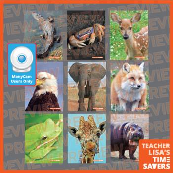 ManyCam Reveal a Picture VIPKid Online Classroom Reward