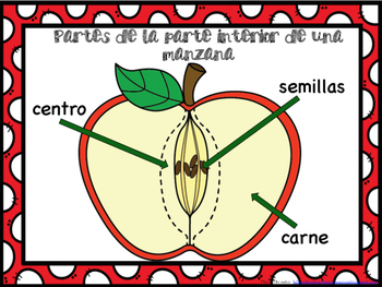 Manzanas ~ Apples