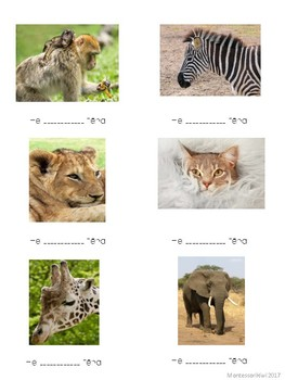Maori Animal name worksheet