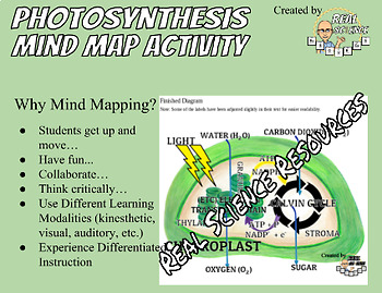 Mapping Out Photosynthesis - Mind Mapping an Overview of Photosynthesis