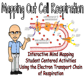 Mapping Out Respiration - Mind Mapping & the Electron Transport Chain