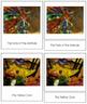 Marc (Franz) 3-Part Art Cards