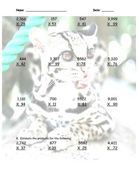Margay Math (Multiplication Practice Sheet w/ Rain Forest Tie-In)