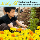 Marigold: Herbarium Project and Teacher's Guide/ Science Outdoor Activity