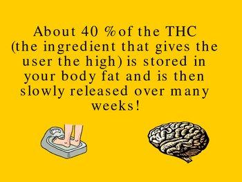 Marijuana:  A Dangerous and Seductive Gateway Drug