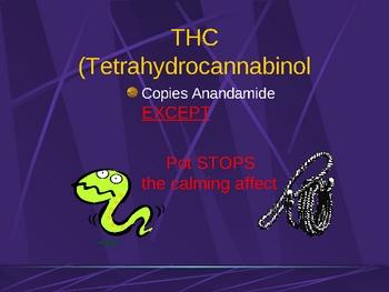 Marijuana and Meth and the Brain