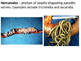 Marince Science - Introduction to Marine Worms and Mollusks