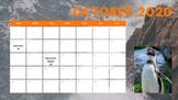 Marine Animal Holidays Calendar