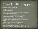 Marine Animal of the Day Warmup Activity 2