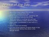 Marine Animal of the Day Warmup Activity 3