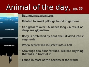 Marine Animal of the Day Warmup Activity 4