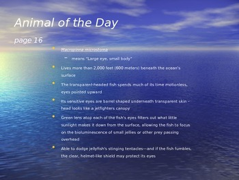 Marine Animal of the Day Warmup Activity 6