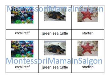 Marine Animals Montessori Three Part Cards