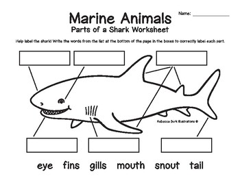 marine animals structure labeling worksheets by rebecca burk illustrations. Black Bedroom Furniture Sets. Home Design Ideas